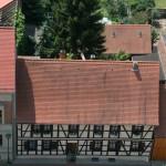 Willkommen in Wörlitz